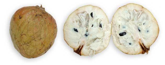 Anonas, Annona reticulata Linn. CUSTARD APPLE.:Philippine ...