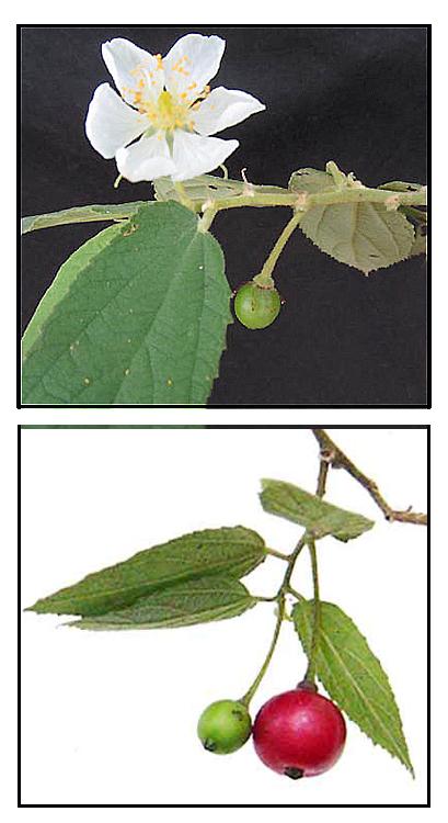 Herbal Plant Medicine