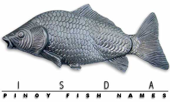 Philippine Fish Names In English And Tagalog Isdang