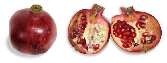 granada punica granatum pomegranate philippine medicinal herbs