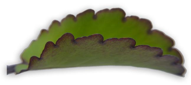 katakataka leaves function